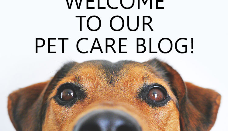 Welcome to our Pet Care Blog!